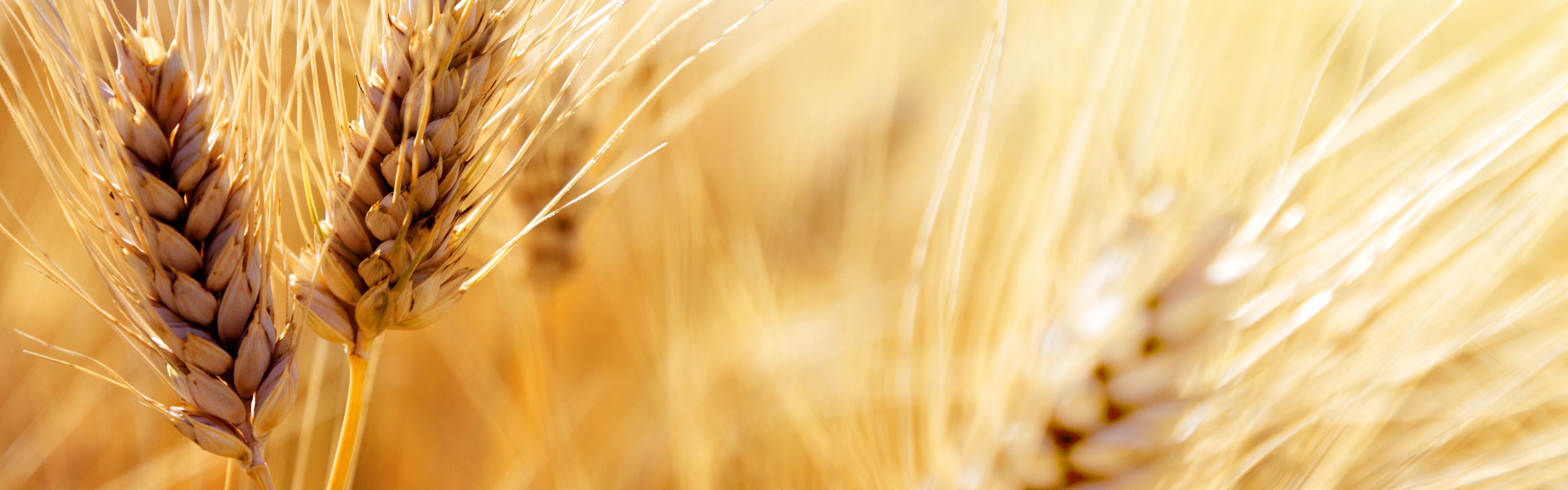 Le meilleur du soleil, du blé, de la terre.